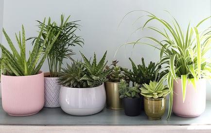 bigstock-House-Plants-Display-Indoor-P-409992835